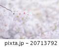 桜 20713792