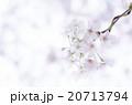 桜 20713794