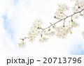 桜 20713796