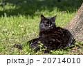 黒猫 20714010