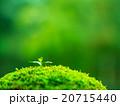 植物の芽生え 20715440