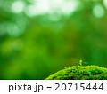 植物の芽生え 20715444