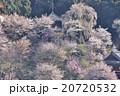【奈良県】吉野山の桜と如意輪寺 20720532
