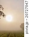 朝靄 太陽 早朝の写真 20727047