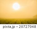 朝靄 太陽 早朝の写真 20727048