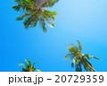 樹木 樹 ツリーの写真 20729359