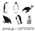 コウテイペンギン 20735979