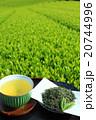 お茶 緑茶 新茶の写真 20744996