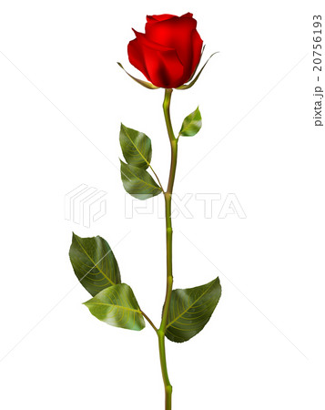 Realistic red vector rose eps 10 20756193 pixta realistic red vector rose eps 10 voltagebd Choice Image