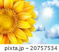 クローズアップ 日光 ひまわりのイラスト 20757534
