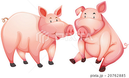 Two fat pigs with happy face 20762885