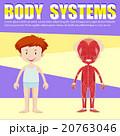 子供 子 人体のイラスト 20763046