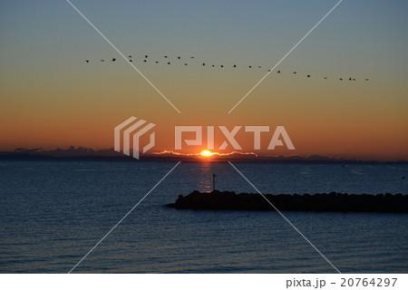 日の出 ウミウのV字編隊飛行と共に 20764297
