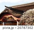 太宰府天満宮本殿と梅の花 20787302