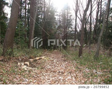 森の径 20799852