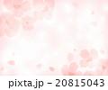 桜背景 20815043
