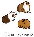 モルモット ペット 小動物 かわいい イラスト 20819612
