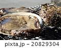 海産物の炭火焼 20829304