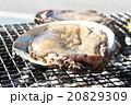 海産物の炭火焼 20829309