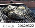 海産物の炭火焼 20829322