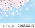 桜 青空 20838813