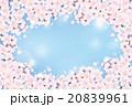 桜 青空 20839961
