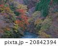 紅葉 渓谷 晩秋の写真 20842394