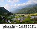 ベトナム サパ 棚田の写真 20852251