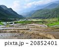 ベトナム サパ 棚田の写真 20852401