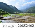ベトナム サパ 棚田の写真 20852402