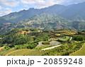 ベトナム サパ 棚田の写真 20859248