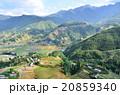ベトナム サパ 棚田の写真 20859340