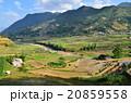 ベトナム サパ 棚田の写真 20859558