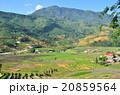 ベトナム サパ 棚田の写真 20859564
