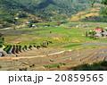 ベトナム サパ 棚田の写真 20859565