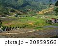 ベトナム サパ 棚田の写真 20859566