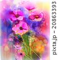 花 コスモス お花のイラスト 20863393