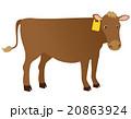牛 ジャージー 20863924