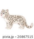 Cartoon smiling  Snow Leopard 20867515