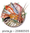 魚 魚介類 食材のイラスト 20880505