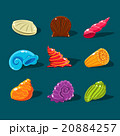 Vector Collection of Colorful Shells 20884257