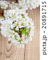 Cherry blossoms on wooden background 20891715