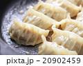 餃子 焼き餃子 20902459