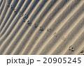 砂浜 20905245