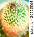アップ 仙人掌 多肉植物の写真 20926596
