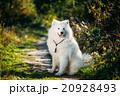 美しい 愛らしい ひょうきんの写真 20928493