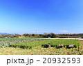 冬晴れの畑  20932593