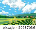 田畑 青空 花のイラスト 20937036