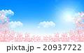 桜 春 青空のイラスト 20937722