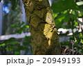 マルハチ(丸八) 20949193